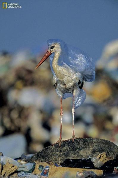 Plastic - a magic or tragic material? | CAG